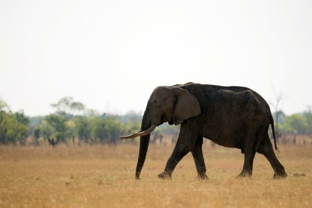 охота на слонов в ДРК