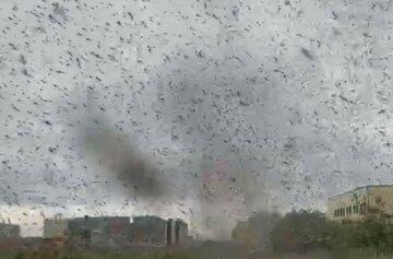 Смерчі з мільйонів комарів пронеслися містом: кадри зловісної аномалії в Росії