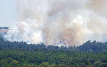 Масштабна пожежа охопила Хортицю: у керівництві говорять про підпал, кадри з місця