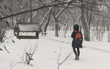 Школярка, фото: Hyser