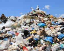мусор, мусорник