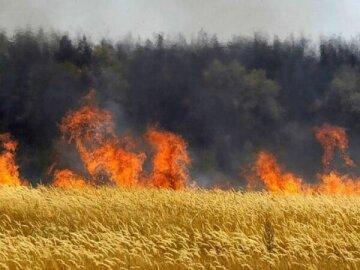 Днепрянин устроил масштабный пожар в поле, кадры: сгорели десятки гектар