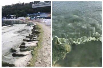 """""""Зеленый борщ"""" вместо моря и невыносимая вонь: печальное видео с одесского пляжа"""