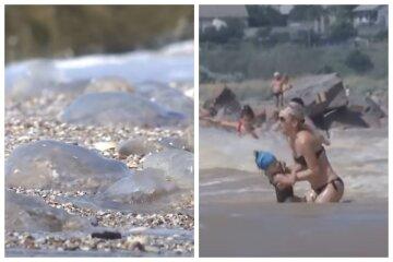 медузы, нашествие медуз, море, курорт, скрины