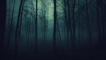 ночь призрак лес