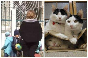 """""""Півроку лікували наслідки"""": медсестра прописала дитині мазь для котів, фото"""