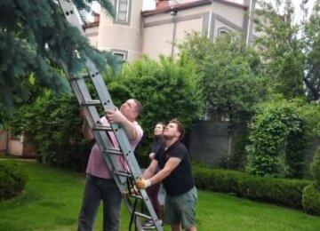 Просидел на дереве неделю: в Харькове спасатели бросились на помощь домашнему зверю, фото