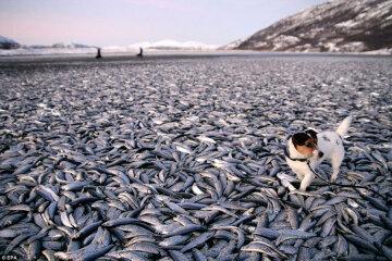 Росіянин украв сто кілограмів риби, щоб викинути її