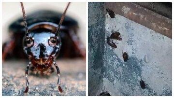 """""""Они везде"""": нашествием летающих тараканов обернулась аномальная погода в Украине, фото гигантов"""