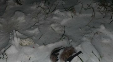 """""""За что так?"""": в Украине уничтожили десятки животных из Красной книги, кадры"""