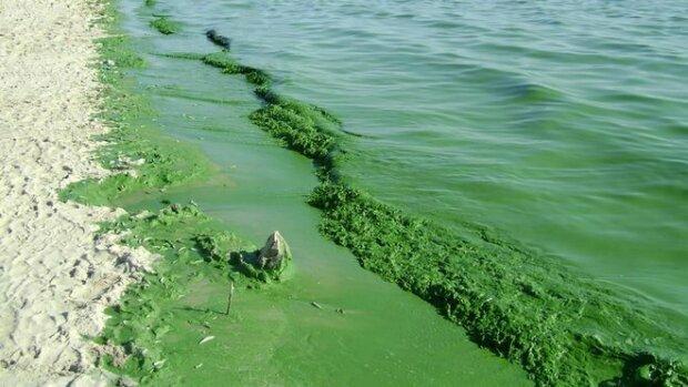 """Чорне море перетворюється на """"болото"""", прийняті термінові заходи: що відбувається на пляжах в Одесі, фото"""