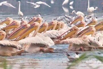 """""""Настоящая весна"""": на Одесчину прилетели дивные птицы, фото"""