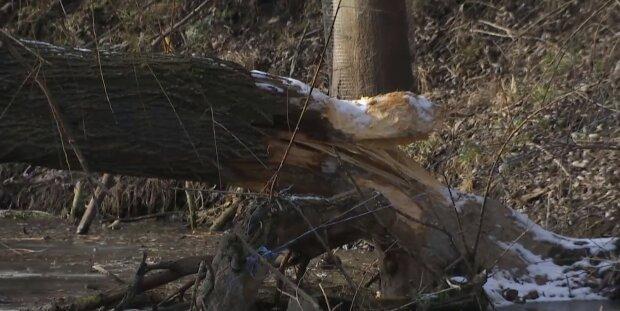 """""""Знищують все"""": нашестя небезпечних істот почалося на Київщині, кадри руйнувань"""