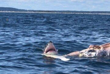 Акула атакувала відпочиваючого чоловіка, медики не встигли допомогти: кадри з місця НП