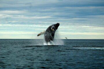 Конец близко: ученые сообщили, от чего гибнут киты