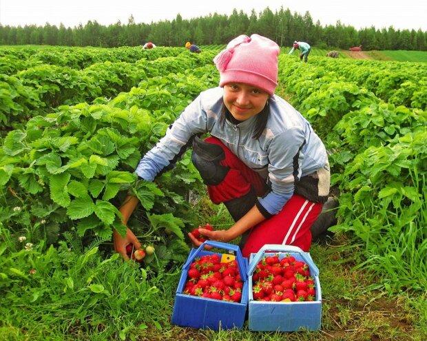 Как безвиз изменил зарплаты украинских заробитчан: озвучены ставки