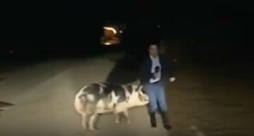 Свинья сорвала прямой эфир на телеканале и покусала журналиста: эпичное видео