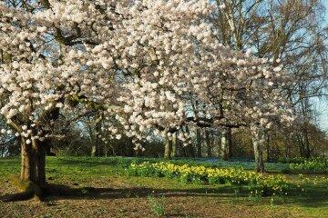 весна парк