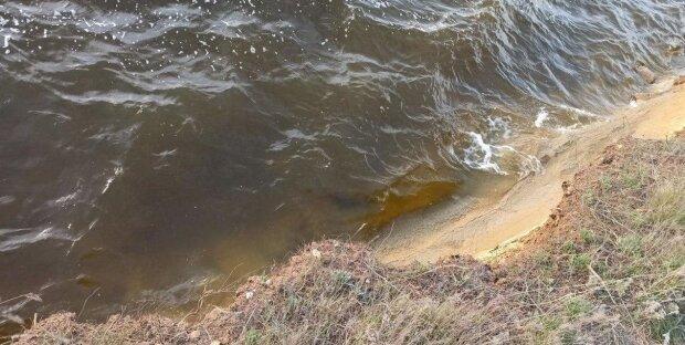 Екзотичну істоту виловили з моря на пляжі в Затоці: як вона виглядає, відео