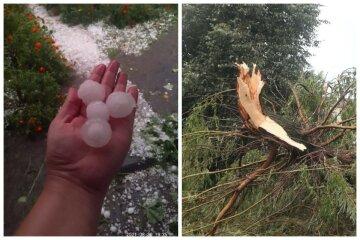 Ураган прийшов в Україну, вітер з коренем вирвав дерева і зламав електроопори: кадри негоди