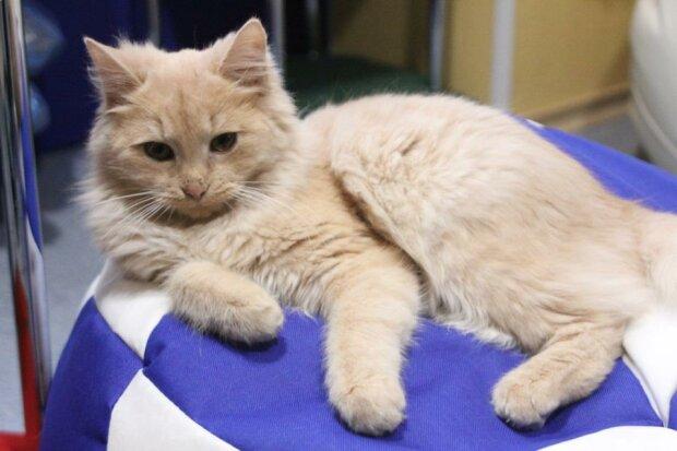Десяток котов могут лишиться дома из-за закрытия кафе (фото)