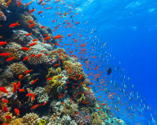 океан, море, дно, рыбы