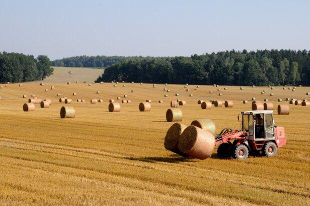 Сельское хозяйство урожай