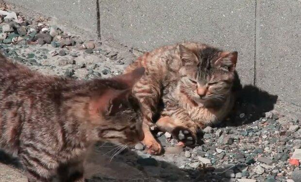 """В Киеве неадекват избавился от котов нечеловеческим способом, фото: """"Отравил и..."""""""