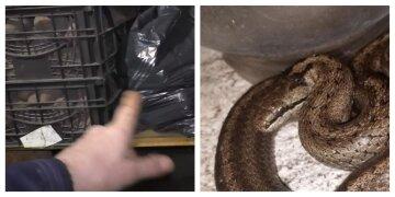 "К украинке залезла полуметровая змея, фото: ""Такая красавица"""