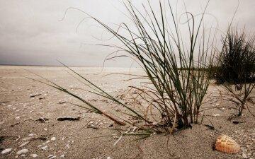 засуха, катастрофа, крым