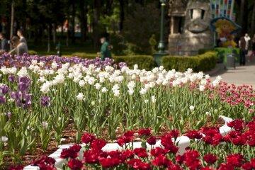Харьков, цветы, весна