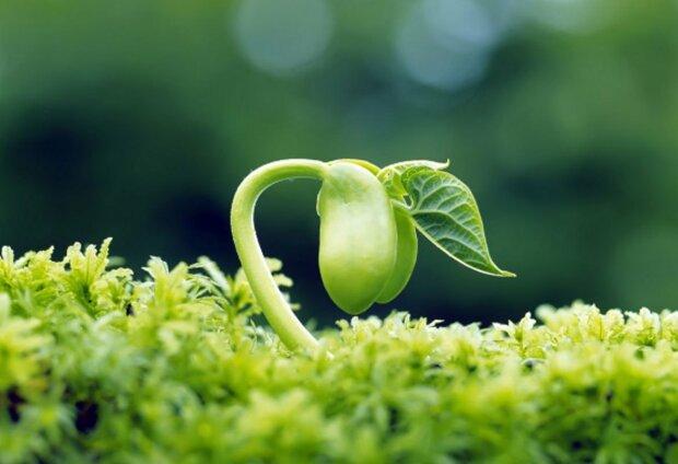 життя рослини зелень природа