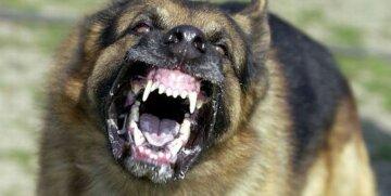 бешенство, агрессия, пес, зубы, оскал, клыки