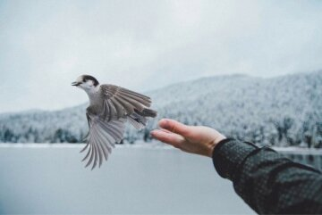 свобода, счастье, добрый человек, рука, мужчина
