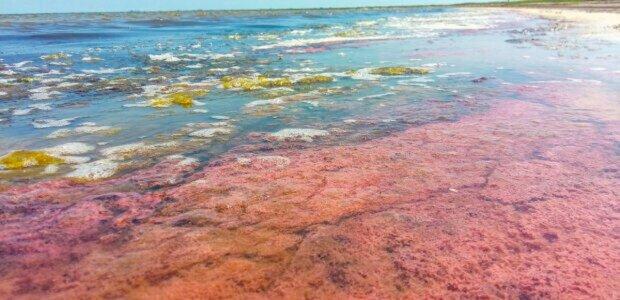 Загрожує здоров'ю людей: в Одесі море вкрилося червоним кольором, екологи забили тривогу