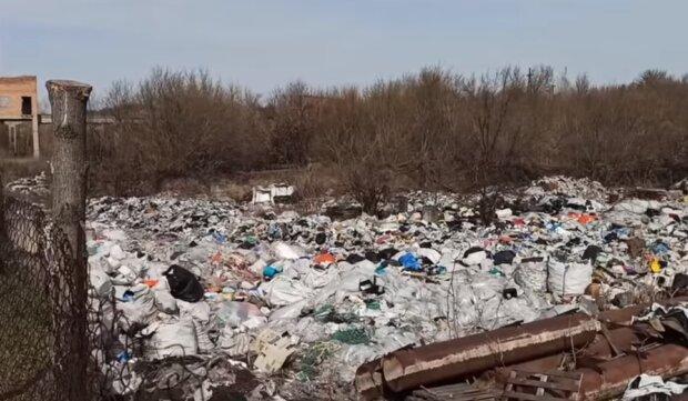 Жуткая свалка под Киевом: в горах мусора бегают свиньи и лежат тела животных, видео
