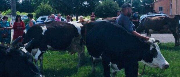 """Під Харковом корів зігнали на мітинг проти передачі пасовищ: """"Земля віддана"""""""