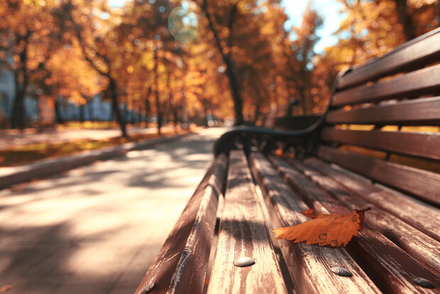 Park bench autumn urban landscape recreation