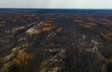 """""""Другий Чорнобиль"""": у мережі показали наслідки лісових пожеж на Луганщині"""