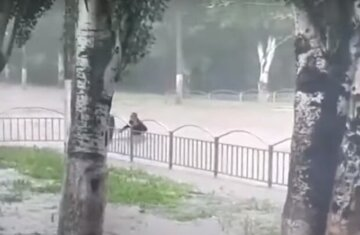 Стихія наробила лиха на Одещині, затопивши будинки: рятувальники показали наслідки негоди