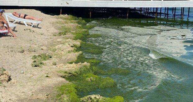 """На одеських пляжах виявлена небезпечна інфекція: """"Вживання води може призвести до..."""""""