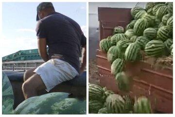 Сотни тысяч арбузов пустят на удобрения, фермеры в отчаянии: распродать их не удается