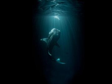 Величезне хиже чудовисько виловили в озері: розміром з людину, вражаючі кадри