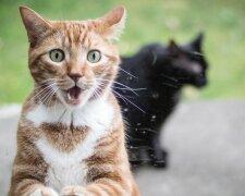 кот коты кошка кошки животные