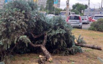 В Днепре ради торгового центра вырубили голубые ели на 1,5 млн грн: красноречивые фото