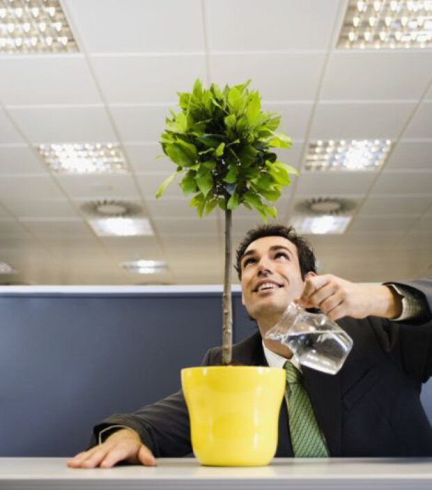 растение, офис, цветок