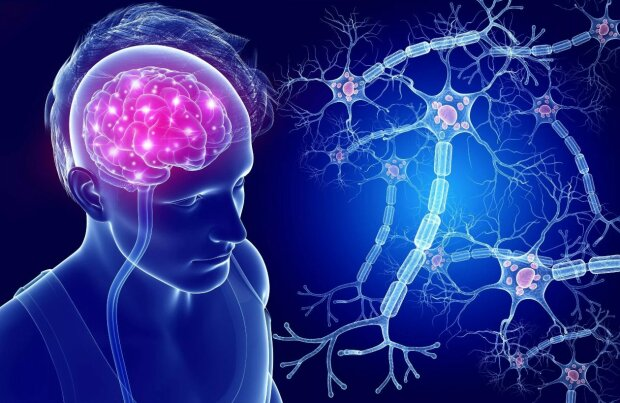 мозг, нервные клетки