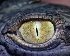 глаз змеи, змея, монстр