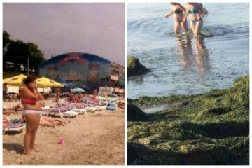 Нова напасть обрушилася на український курорт після медуз, кадри: відпочинок зіпсований
