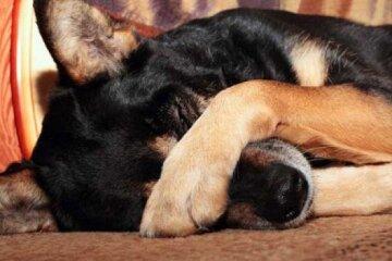 """На Одещині масове отруєння собак, кадри: """"Отрута розкидана..."""""""